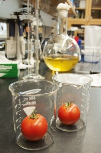 Tomato_laboratory_research