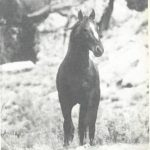 Picture of a wild horse