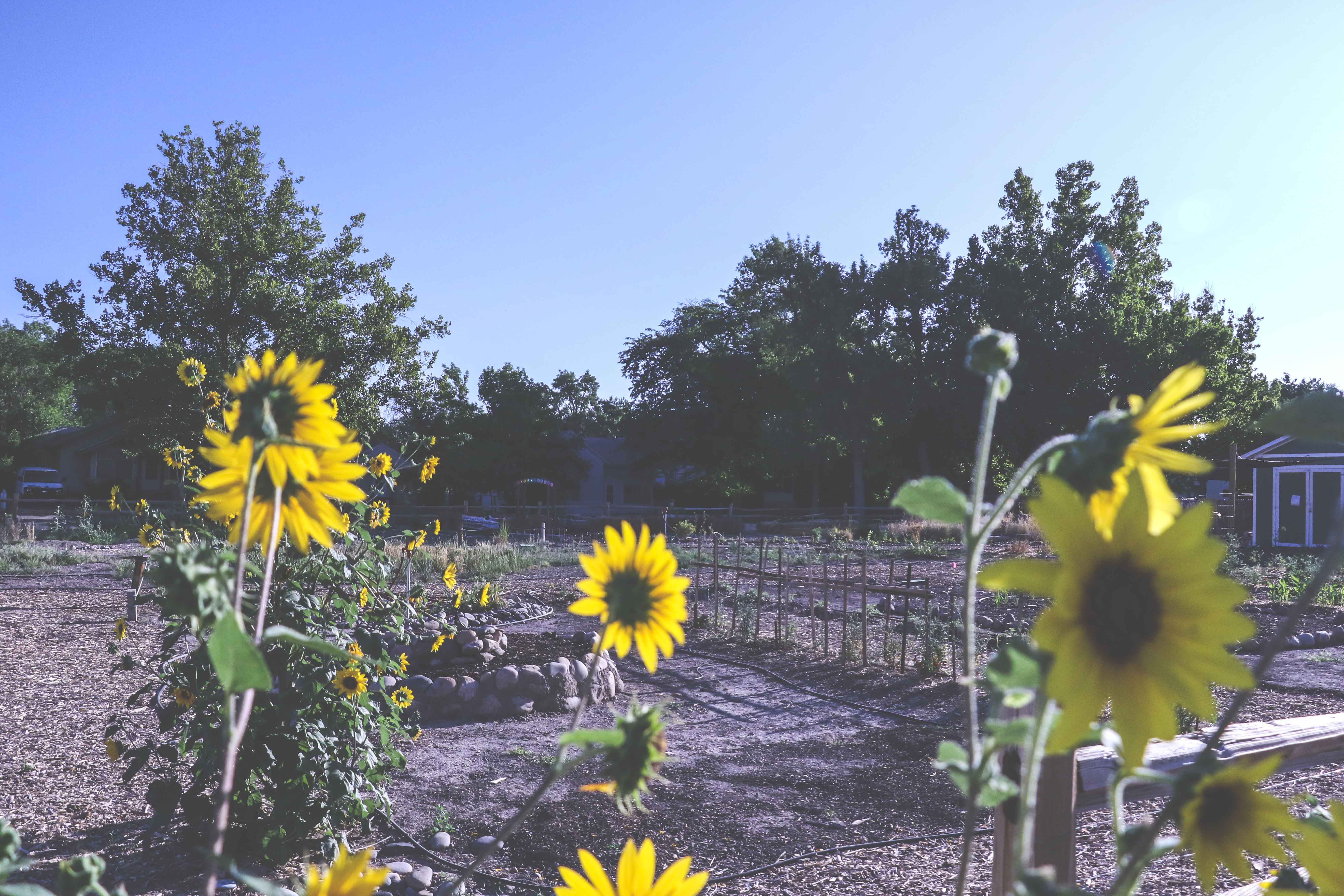 Photo of Mesa County Libraries Discovery Garden