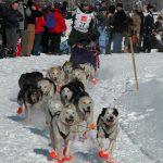 Iditarod racer and dog team