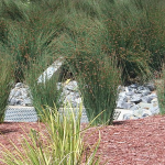 image of bioswale